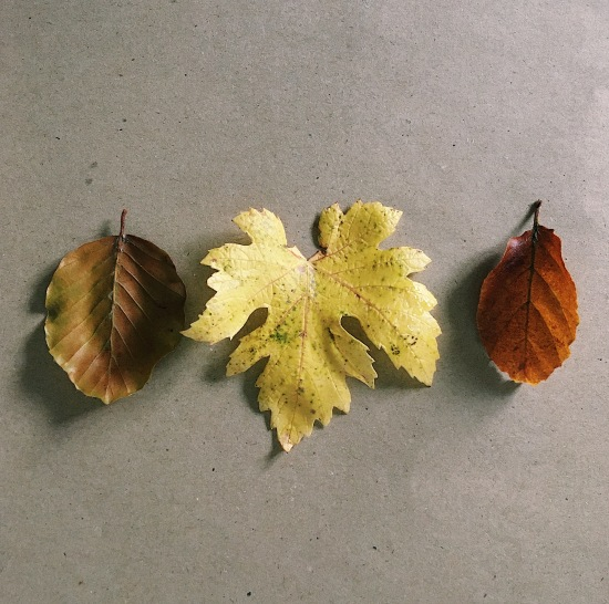 Three autumn leaves on a Kraft paper background.